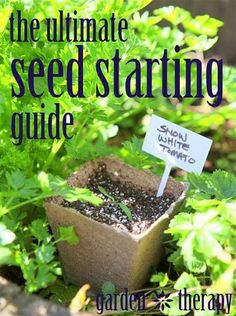 The Ultimate Seed Starting Guide