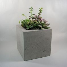 Find it at the Foundary - Square Concrete Planter$41.00