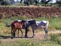 Horses View Photos, Horses, Travel, Animaux, Viajes, Destinations, Traveling, Trips, Horse