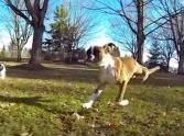A Two-Legged Dog is an Inspiration to Us All - the Ultimate Feel Good Video...unbelievable, God's grace is suffcient for all His creatures!
