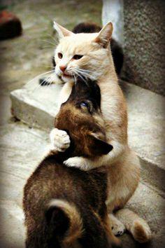 hug me !!