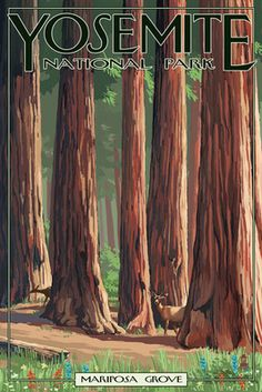 Yosemite National Park, California - Mariposa Grove - Lantern Press Artwork (Art Print Available) California National Parks, California Art, Us National Parks, Yosemite California, California Camping, Vintage California, Muir Woods National Monument, Sequoia National Park, Voyage Usa