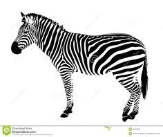 Zebra Free Vector Clip Art Free Vector | Clip art | Pinterest ...