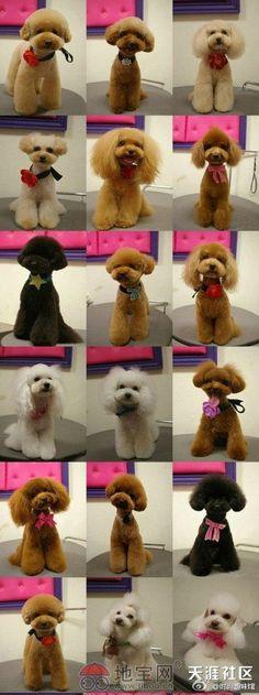 Poodles Davinci hair cuts!