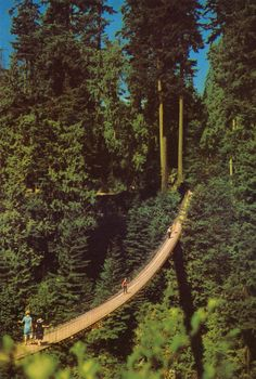 Capilano Suspension Bridge, Vancouver - Canada..... I want to visit this when we go to Vancouver next month.