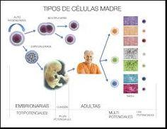 Blog noticias,actualidad,y mucho más: Células madre con memoria:El futuro contra el cánc...