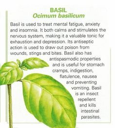 Ancient Remedies Basil / ancient knowledge on imgfave Healing Herbs, Medicinal Plants, Herb Plants, Homeopathic Remedies, Health Remedies, Holistic Remedies, Natural Medicine, Herbal Medicine, Holistic Medicine
