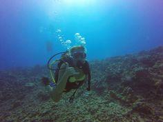 hawaii-scuba-diving-1.jpg 1,600×1,200 pixels