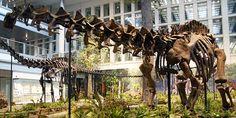 Brontosaurus may return thanks to new dinosaur analysis | Ars Technica