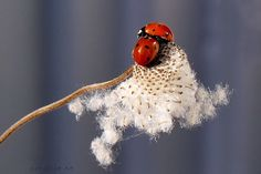 Two of a kind...Ladybugs...photo via Flickr