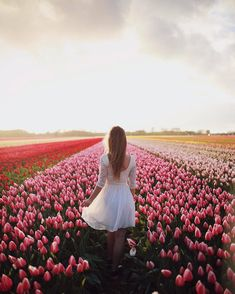 Pray for what you want, and walk towards it with faith! Summer Picture Poses, Summer Pictures, Tulips Flowers, Beautiful Flowers, Montreal Botanical Garden, Tulip Fields, Pretty Photos, Photography Poses, Flower Photography