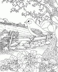 iowa state bird coloring page.html