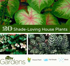 I found a list of indoor house plants that can take full or partial shade on HGTVGardens including ferns, orchids, palm trees, ivy and more.