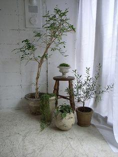 背の高い植物もコーナーなら上手く配置できます。庭やベランダがないお部屋でも、このようにアレンジ次第でグリーンを楽しむことができますね。