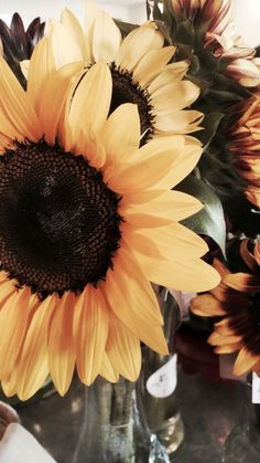 Sunflower - New Ideas Cute Wallpaper Backgrounds, Tumblr Wallpaper, Pretty Wallpapers, Bts Wallpaper, Sunflower Iphone Wallpaper, Iphone Background Wallpaper, Aesthetic Pastel Wallpaper, Aesthetic Wallpapers, Sunflower Pictures