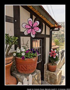 Flores de la Colonia Tovar.