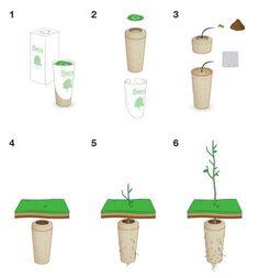 Urnas biodegradables que te transformarán en un árbol cuando mueras