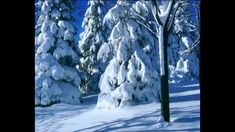 Wass Albert: Karácsonyi versek - Kiss Vivien - YouTube Advent, World, Youtube, Outdoor, Outdoors, The World, Outdoor Games, The Great Outdoors, Youtubers