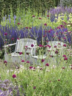 Attractive scrim of Knautia macedonica works well with neutral seats and strong purple wall beyond.