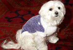 """Жена иска 1500 евро - Първи Български Зоопортал - Тя разказва, че кучето й било цялото в кръв, а в """"реномирания"""" ветеринарен център успели само да спрат кървенето. Въпреки факта, че част от езика на Алекс липсва, от клиниката отказали да изплатят компенсация на стопанката, което я накарало да предприеме по-радикални стъпки и да осъди небрежните ветеринари."""