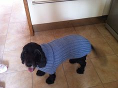 Dogs winter jumper made from yarn left over from a cardi. Pattern from Pinterest. She loves it x