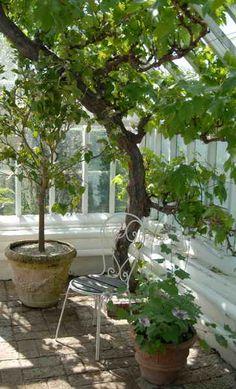(ingen titel), - Lilly is Love Helsingborg, Greenhouse Gardening, Green Garden, Glass House, Atrium, Garden Inspiration, Bird Houses, Outdoor Living, Planters