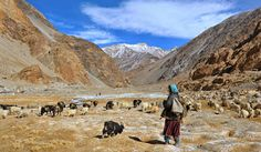 Nomadic #travel in ladakh www.kashmir-ladakh-tourism.blogspot.com/2014/12/nomadic-travel-in-ladakh.html