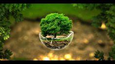 tree in a broken bowl digital art hd wallpaper 1920x1080
