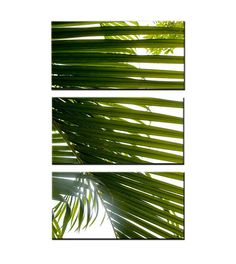 Never Let You Go- Large 3 Panel, Canvas Art, Palm Frond, Palm Tree, Home Decor, Palm Branch, Green, Harmony, Peace, Nature, READY TO HANG