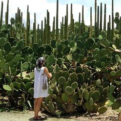 Jardín Etnobotánico de Oaxaca / warm thoughts on cold days / flashbackfriday  #cactuslove @cactusmagazine #succulove  Photography: The Dilettante Gardener #oaxaca