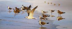 Shorebirds, oil on canvas