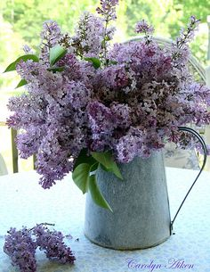I love lilacs...the look, the scent...reminds me of my Grandmother's farm....Linda