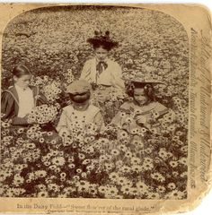 daisy field, vintage photography, old stuff