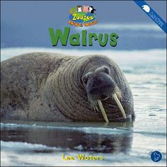 $4.25 Walrus: Does every walrus look the same? Read about the different features of this large animal.