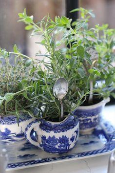 planting herbs DIY