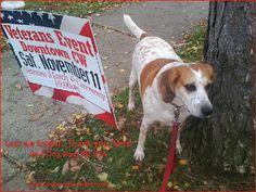 Dog Pawsitive Tidbits: God Dog Bless the Vets USA