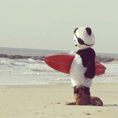 panda surfing