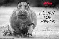 Exploring the world of hippos and the role that they play in our ecosystems.