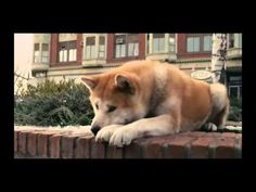 Hachiko - A Dog's Story Music Video From Movie. A dog waits for 9 long years, outside a train station in Japan, for the return of his owner who unfortunately had died. Based on a true story. Very moving.