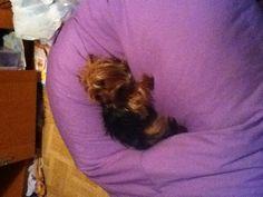 My dog mienna