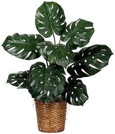 6 robuste planter til dig, der ikke har de grønneste fingre