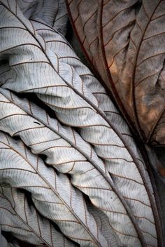 Lines, neutrals found in nature. Will look at using repetition of line throughout the space Leaf Texture, Natural Texture, Natural Forms, Paint Texture, Texture Design, Patterns In Nature, Textures Patterns, Art Grunge, Mood Images