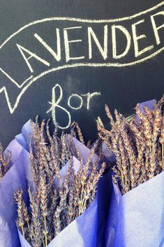 Living the Dream: I Started a Lavender Farm in Oregon: Growing lavender on a beautiful island in Oregon sounds like a dream come true, right? Here's what it took to make it a reality.