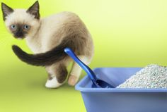 How to Resolve Kitty Litter Box Issues