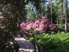 Rhododendron Park, Sidewalk, Plants, Side Walkway, Walkway, Plant, Walkways, Planets, Pavement