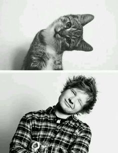 Ed Sheeran and a cat. Two of my favorite things. I love Ed's voice almost as much as I love cats. Edward Christopher Sheeran, I Love Him, My Love, Lauren Daigle, Al Pacino, West Yorkshire, Sam Smith, Youtubers, Famous People