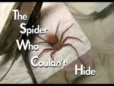 The Spider Who Couldn't Hide - YouTube