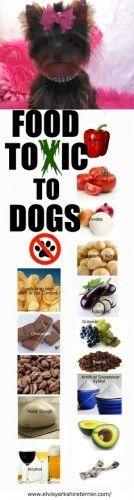 #chiens #aliments #toxique #zoomalia #animalerieenligne #blog #conseils #animaux