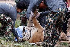 """""""O Grito do Bicho"""": Autoridades confiscam animais do famoso Templo dos..."""