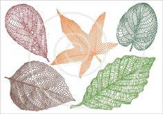 Set of detailed vein leaves, skeleton leaf silhouette, autumn, fall, digital clip art, clipart, scrapbooking, home decor, vector, download via Etsy